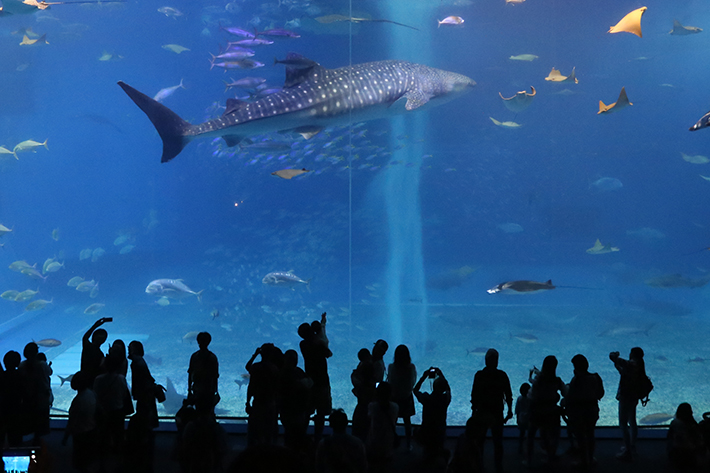 Aquariums Header