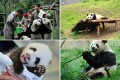 panda-facts