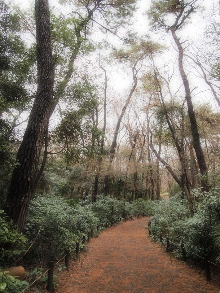 Nature Reserve Japan