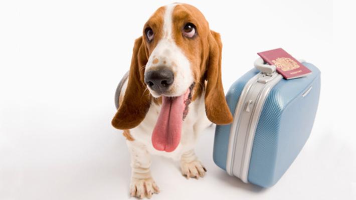 dog-suitcase