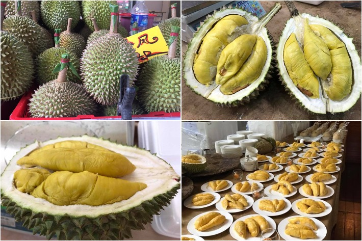 Durian Collage
