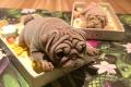 Dog Shaped Ice Cream